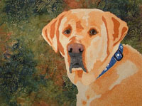 Golden lab with blue collar, fern background.