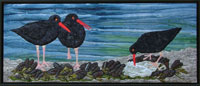 Three black oyster catchers with bright orangey-red beaks are standing in a bed of mussels and seaweed and one oyster.